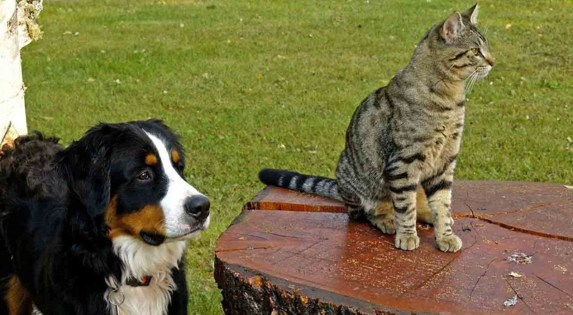 Camping acceptant les animaux