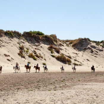 Camping Belle Dune ***** : Nearby