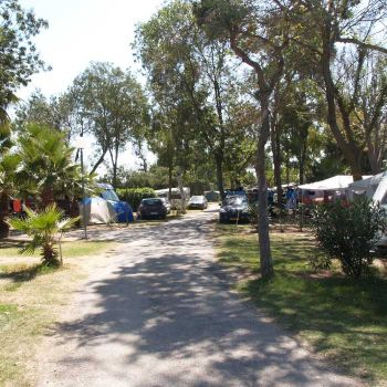 Camping le Soleil ***** : Pladser